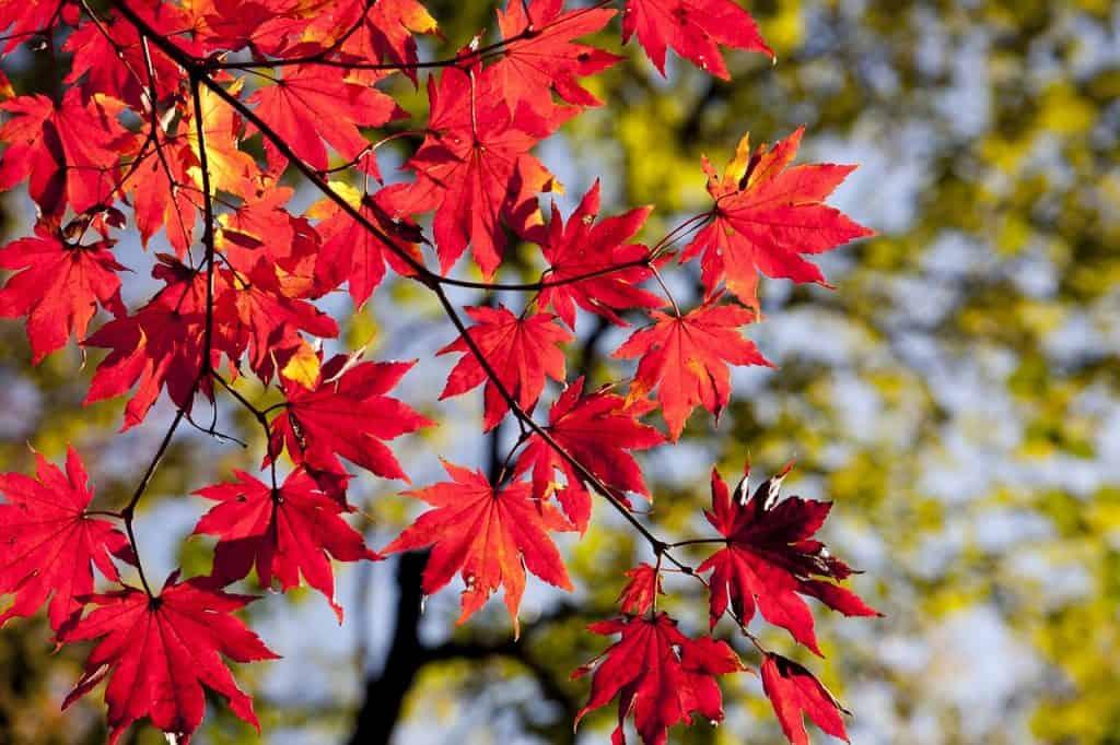 The seasons of share markets - autumn